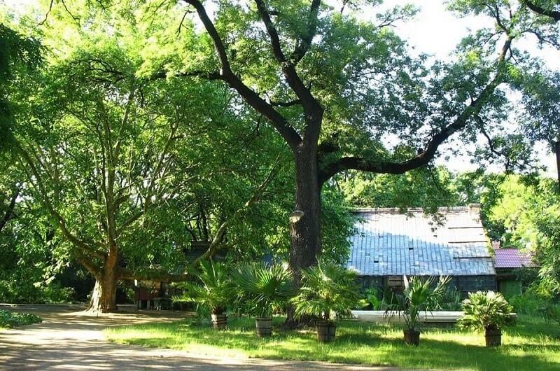 Dnipro Botanical garden
