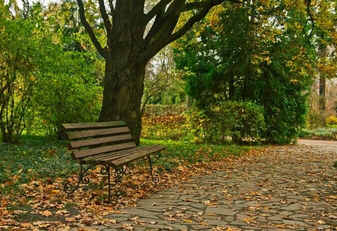 Syretsky arboretum