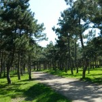 3-парк Победы / Victory Park