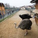 Zoo in Mezhyhirya
