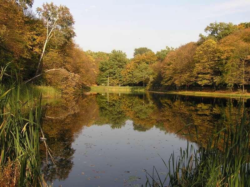 Национальный природный парк Голосеевский