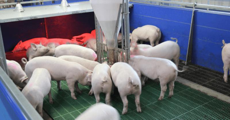 Домашняя ферма