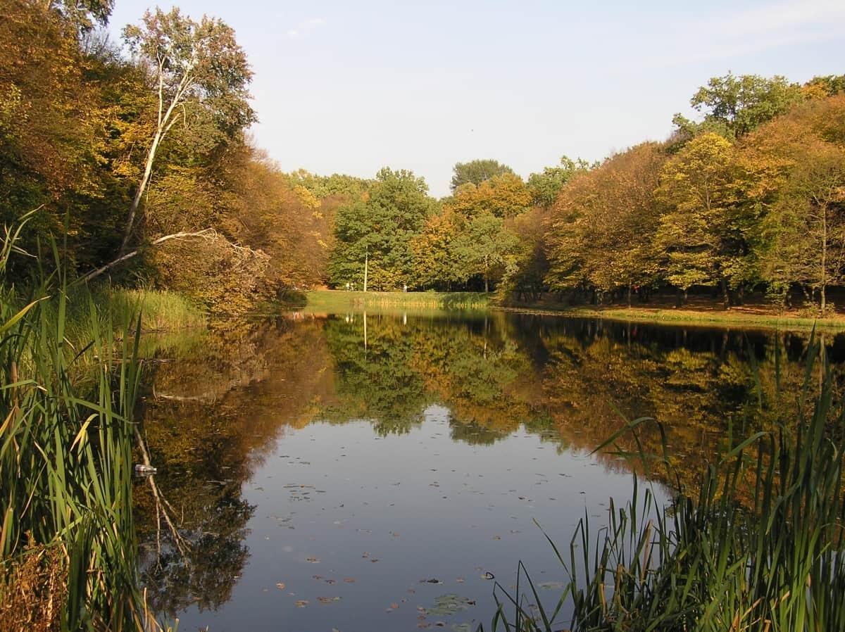 Holosiivskyi National Nature Park